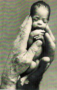 Hands Holding A Baby